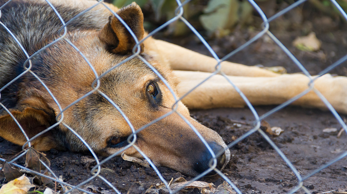 Jefferson-County-Sheriff-Department-Alabama-Animal-Cruelty
